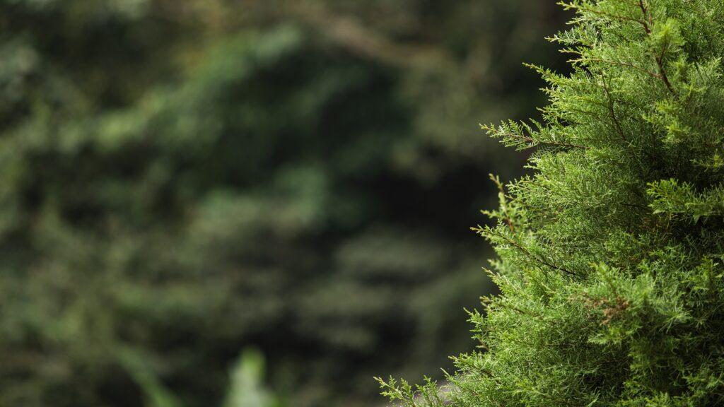 вечнозеленый контет что это и как писать его?